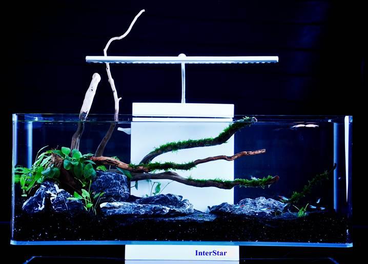 Aquascape Design Aquarium
