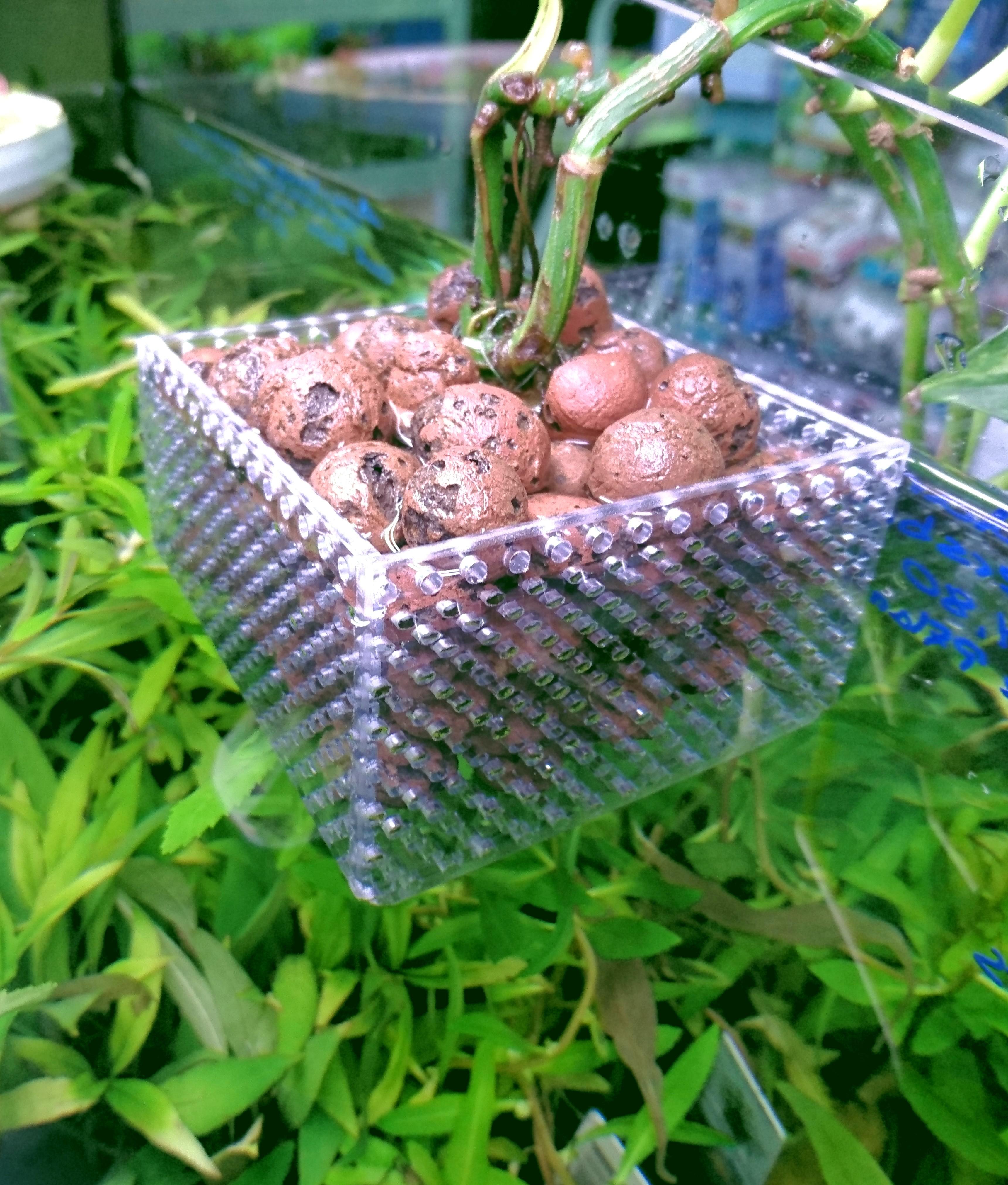 Artikel for Hydrokulturpflanzen shop